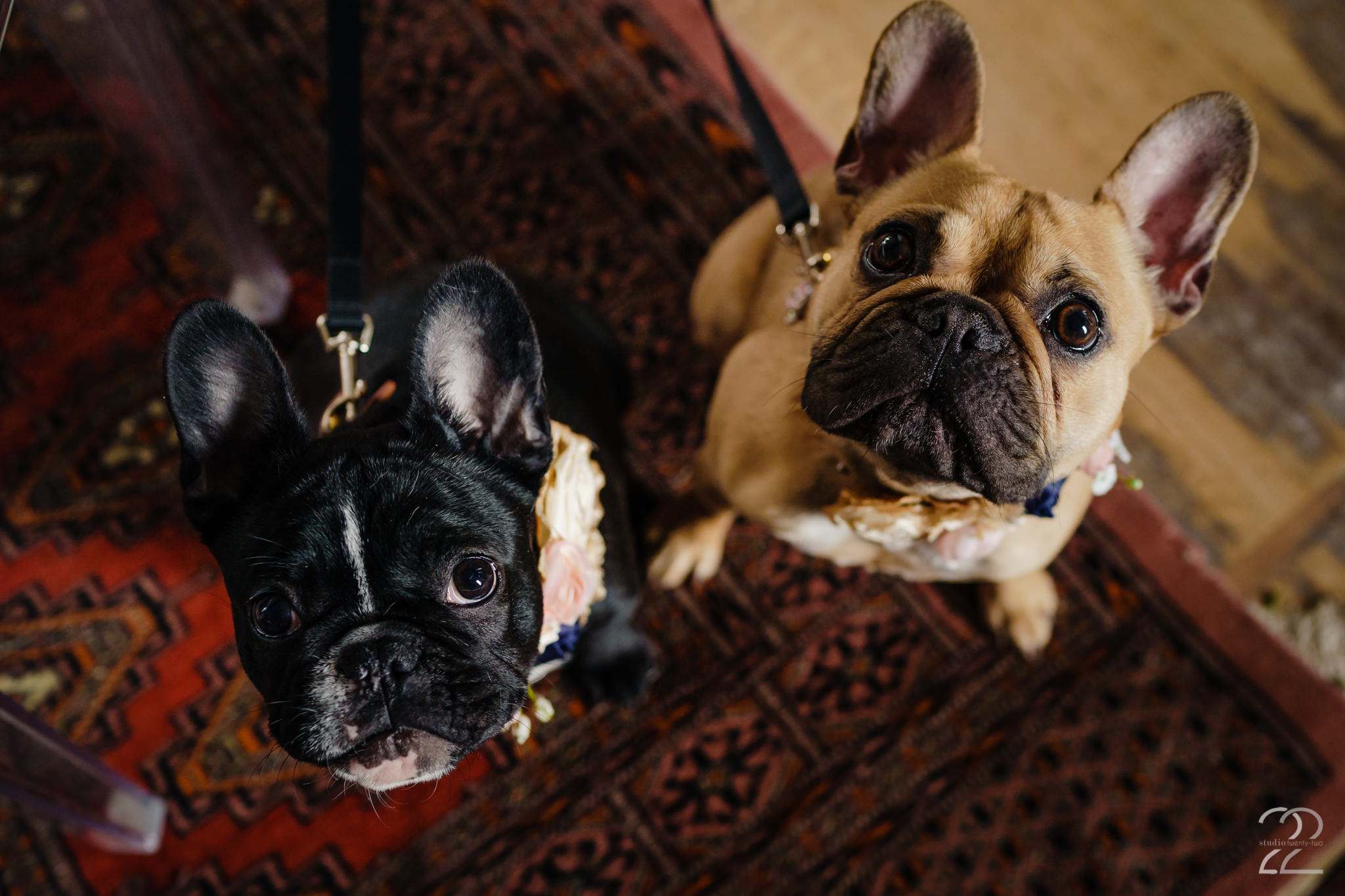 Pets in Weddings - Cincinnati Wedding Photos