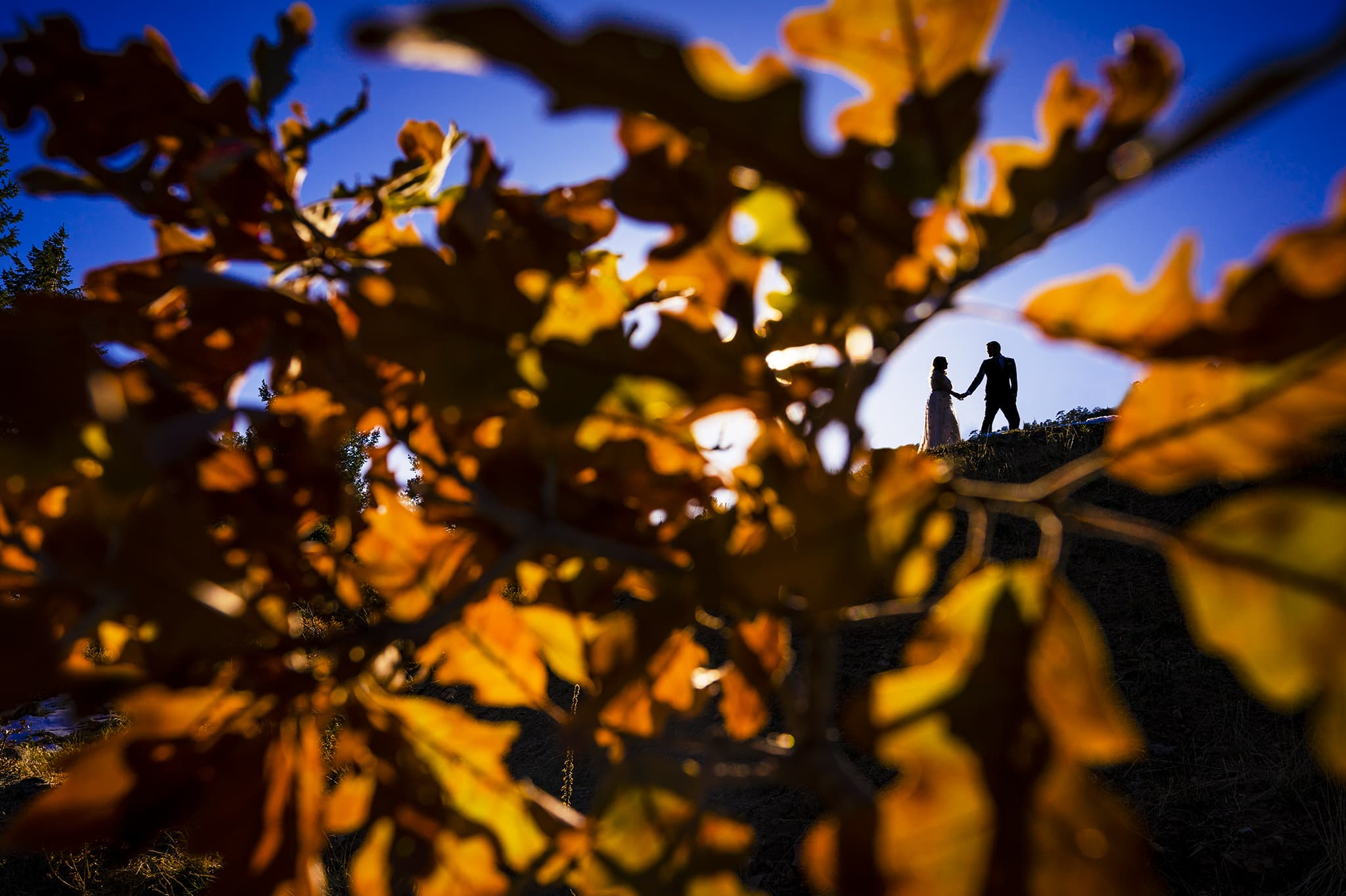 Silhouette of bride and groom through tree leaves